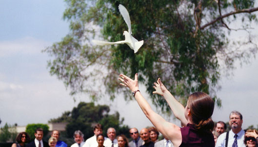 dove being released at wedding ceremony