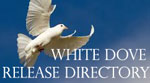 White dove against a blue sky